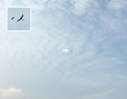 ケントウン14、飛んでるトコ。 その2。