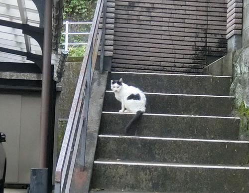 9日の、ネコ発見! その1!
