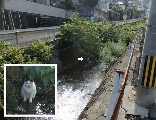 13日のお散歩中、ネコ発見!? って、そこで~!?