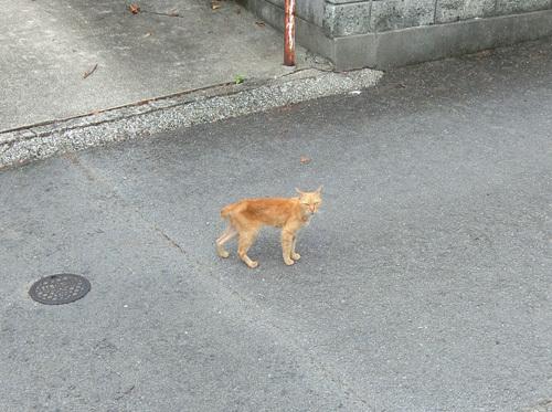 5日の・・・、ネコ発見。