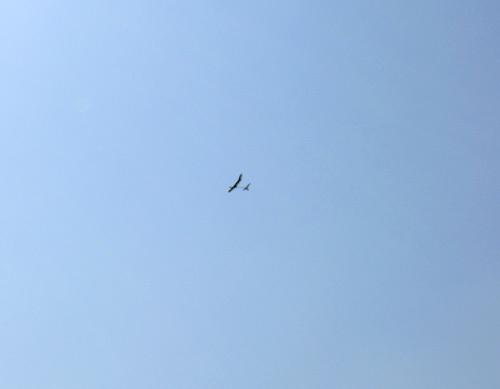 T田さんのkh-18。