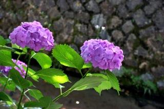 180617tetsugaku(1).jpg