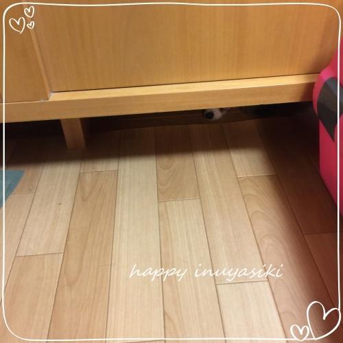 mini2018IMG_3617(1).jpg