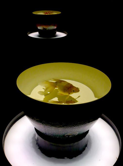 ECOEDO日本橋 アートアクアリウム2018 江戸・金魚の涼