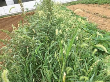 5畝準備4