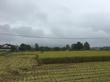 稲刈りニンニク植え10