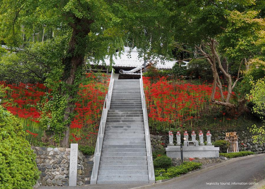 梅林寺のヒガンバナが見頃です! [平成30年9月22日(土)更新]1