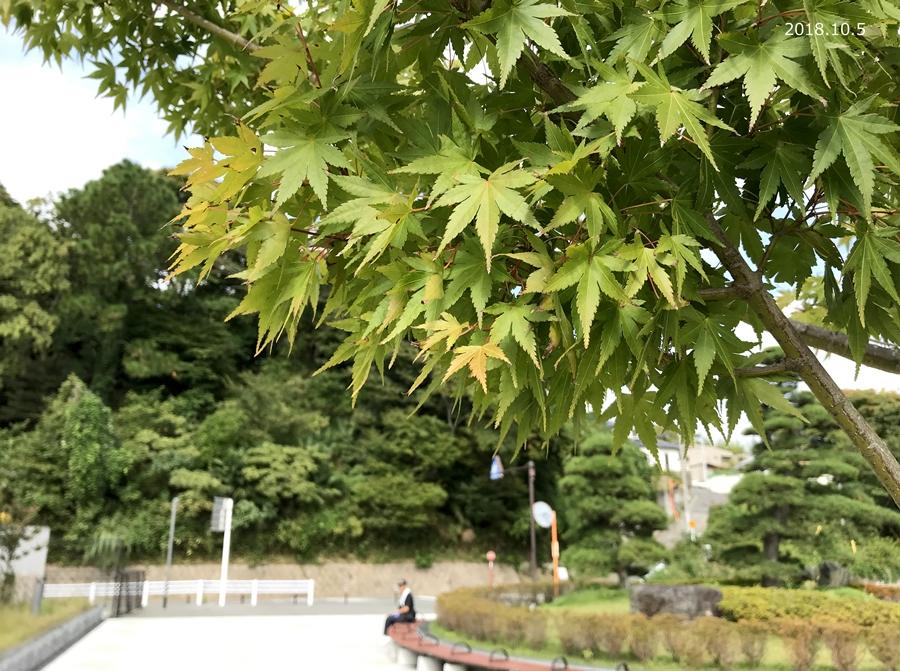 「いわき大交流フェスタ2018」明日、21世紀の森公園にて開催! [平成30年10月5日(金)更新]2