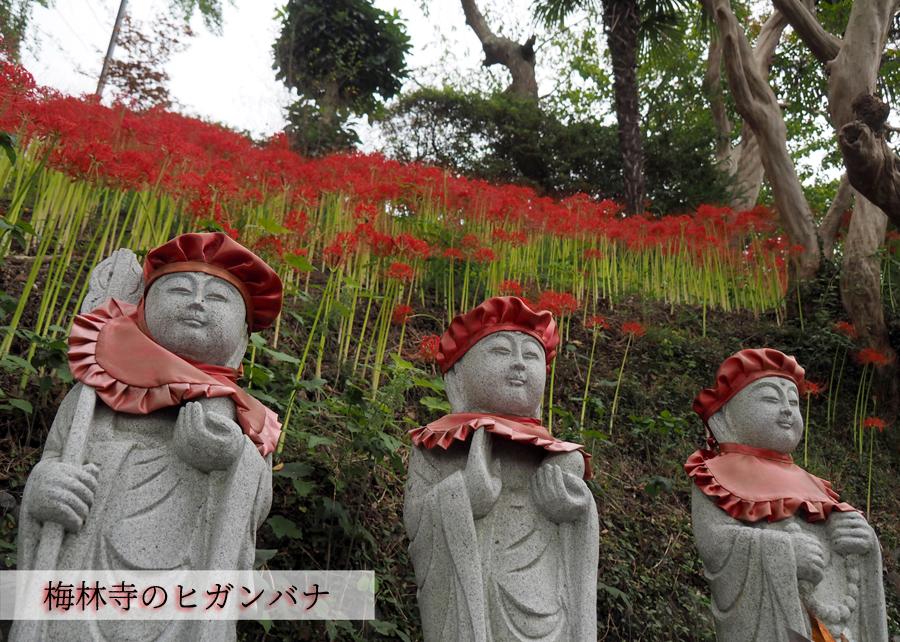 梅林寺のヒガンバナが見頃です! [平成30年9月22日(土)更新]トップ