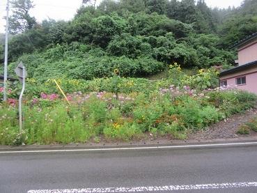 家の後ろの花畑