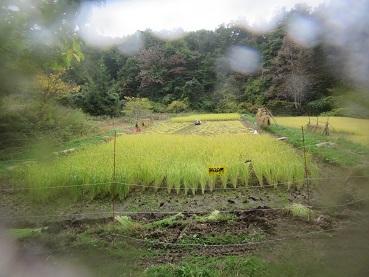 稲刈りは続く