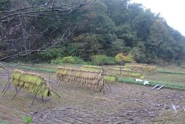 稲刈りの完了