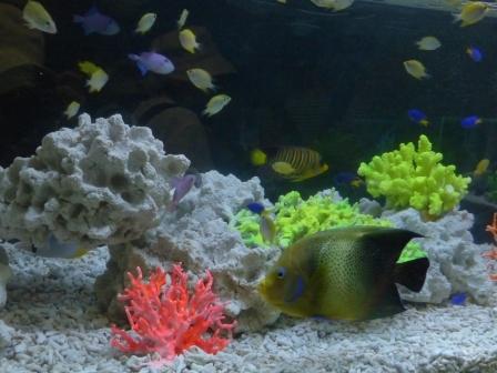 魚たち 3
