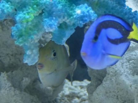 魚たち 4