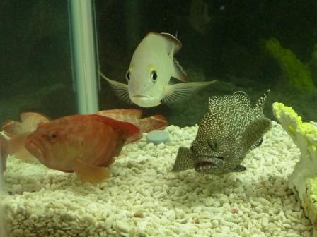 魚たち 6