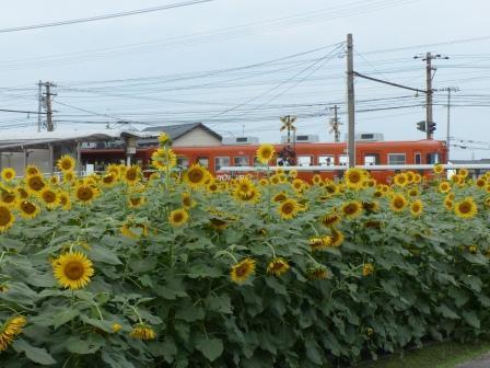 ヒマワリ & 電車 1
