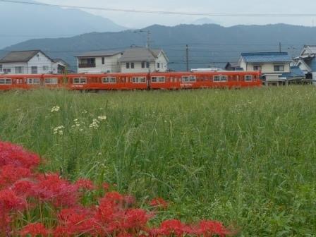 彼岸花 & 伊予鉄道・郊外電車