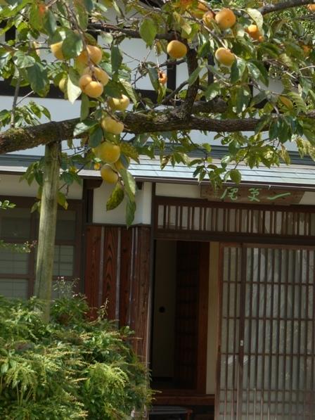 一草庵 と 柿 2