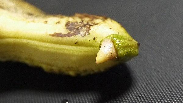 まんごー821-3