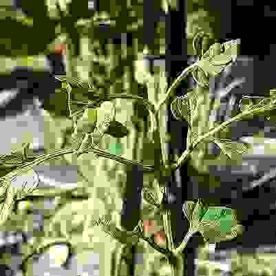 植物の立ち聞き
