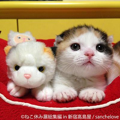 ねこ休み展子猫
