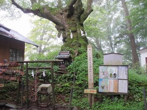 軽井沢 (86)