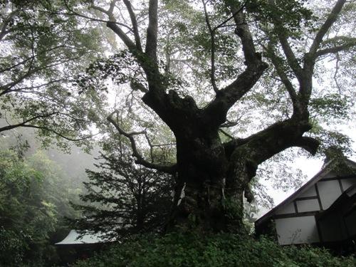 軽井沢 (91)