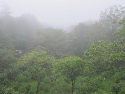 軽井沢 (97)