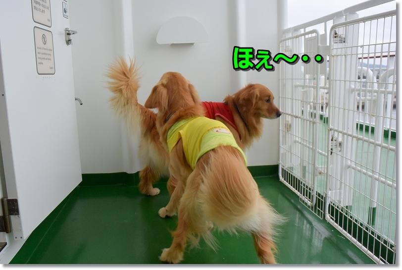 DSC_3315ほ~