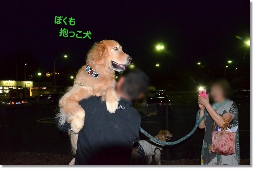 DSC_5659抱っこ犬チャイ君