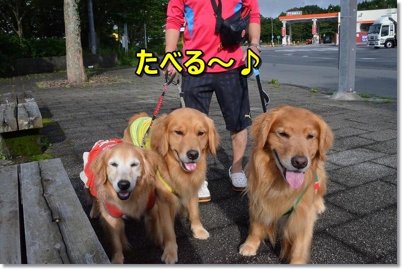 DSC_5728きゅうり食べる