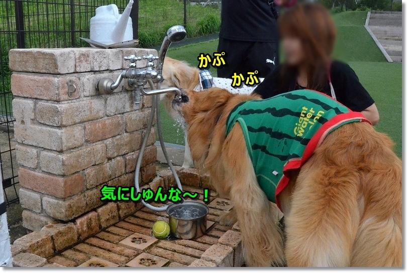 DSC_5846気にすんな~ かぷかぷ