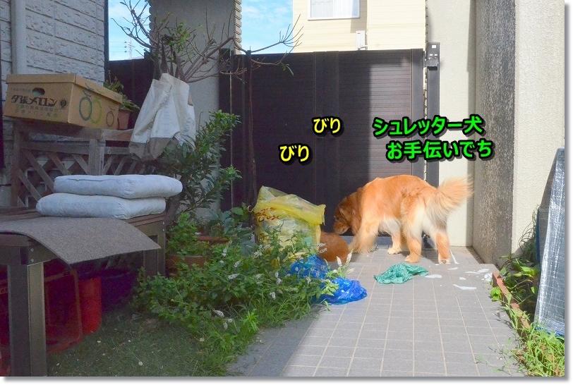 DSC_5949ビリビリ