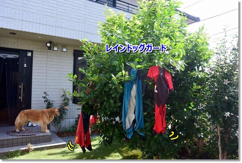 DSC_3530翌日は洗濯祭り