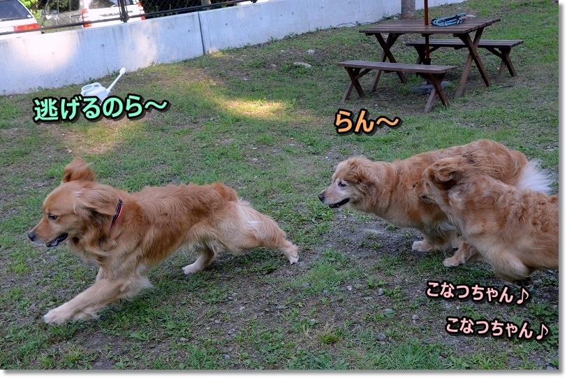 DSC_6274逃げるじょ~