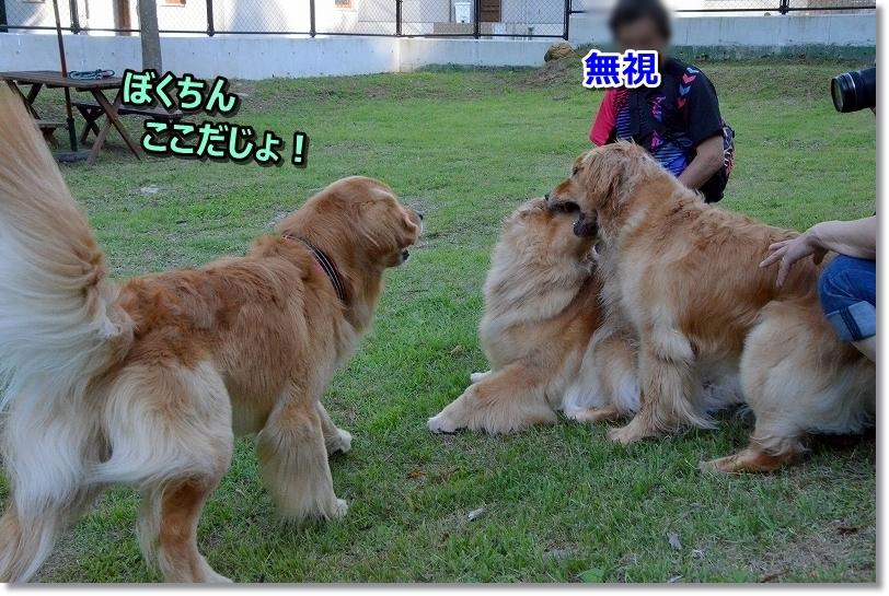 DSC_6319ぼくちんここ