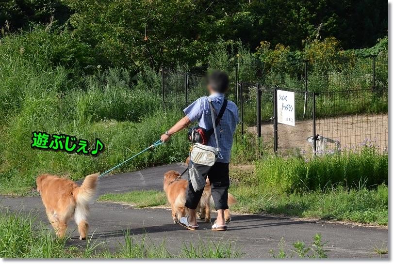 DSC_37038弁天荘の裏に歩いて行くと