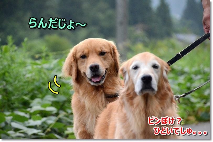 DSC_7140畑??