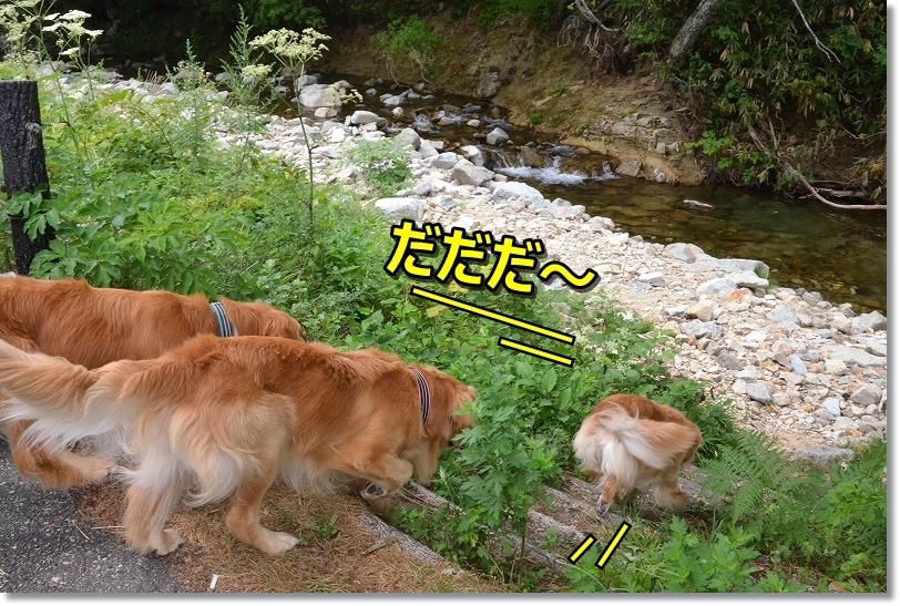 DSC_7222みじゅバカヴィヴィが先頭きる