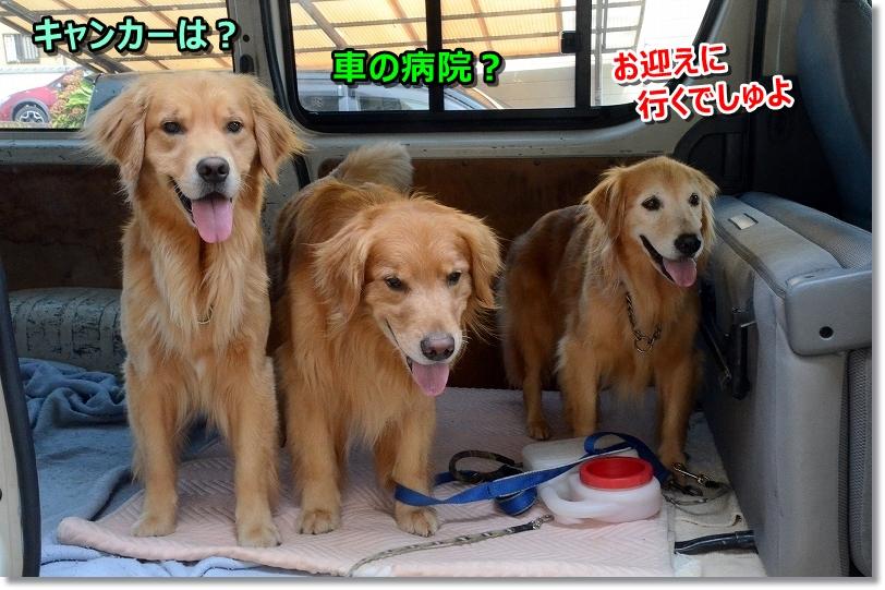 DSC_684しゅっぱ~つ0