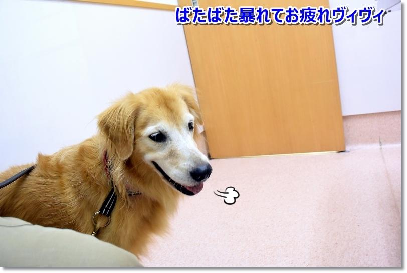 DSC_3842病院嫌いでしゅ