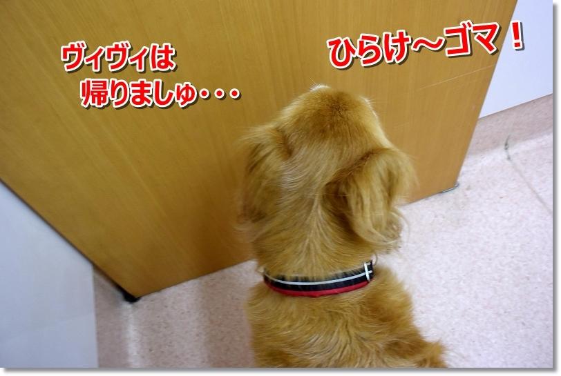 DSC_3846帰りましゅ