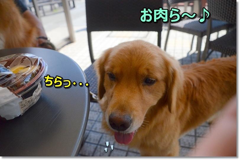 DSC_7409ちらっ・・お肉ら~