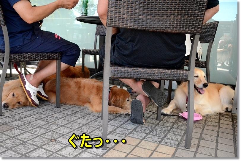 DSC_7427hu~ モっと食べたい・・ぐた~