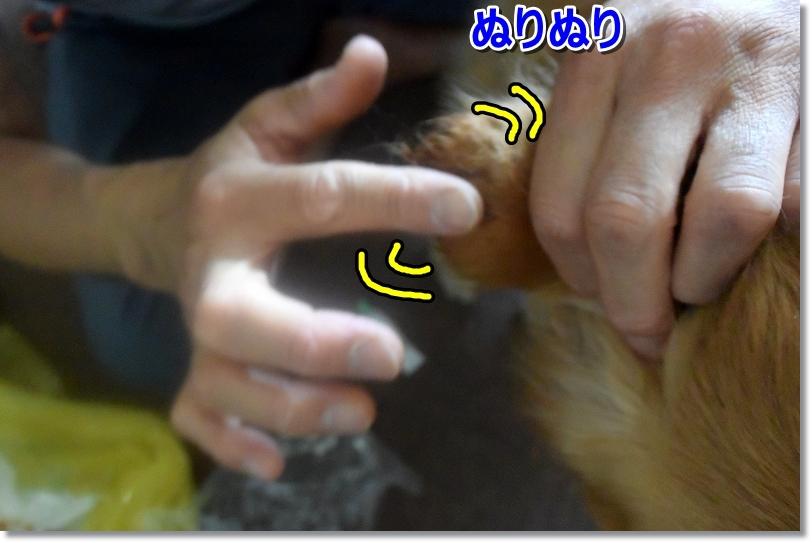 DSC_3810ぬりぬり
