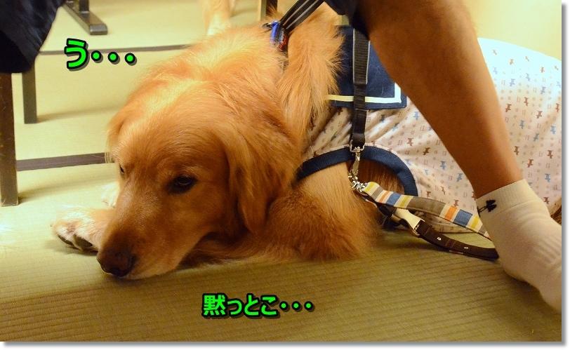 DSC_8068ふ~疲れた