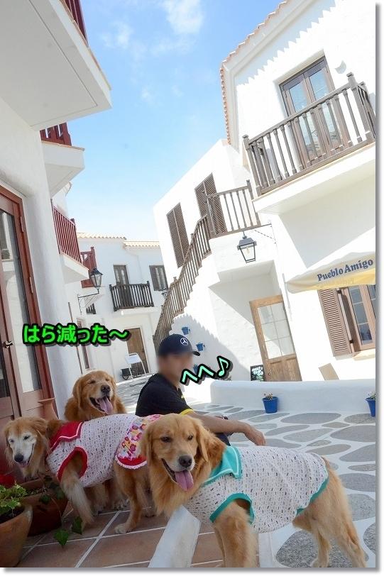DSC_8348あじ~