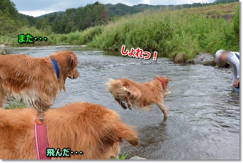 DSC_7547しょれ~