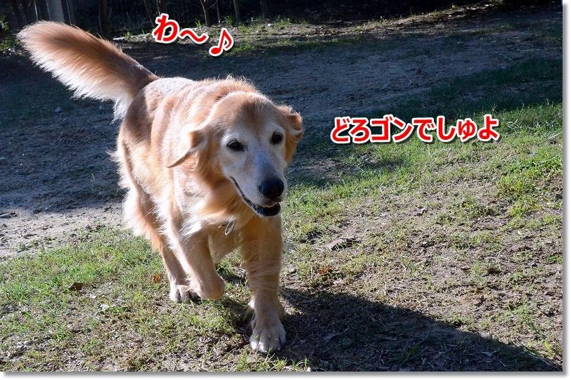 DSC_8407泥ゴンでしゅ