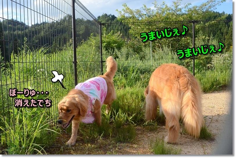 DSC_7045_20180910195248e7e.jpg